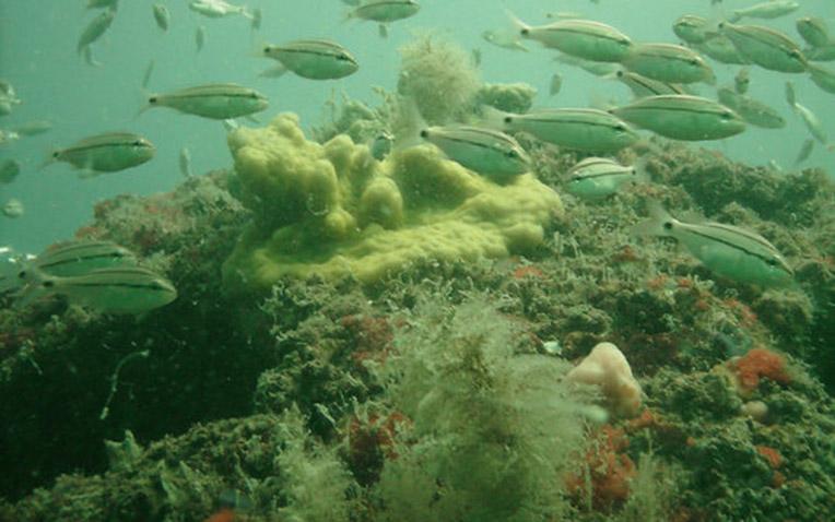 Eternal Reefs - 4 years of growth