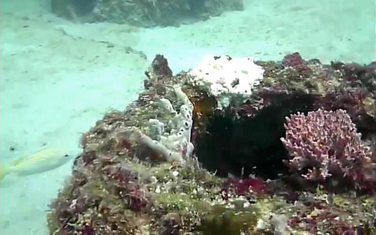 Eternal-Reefs-7-11-2011_020-1