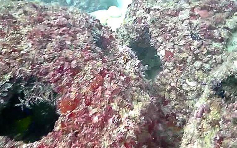 Eternal-Reefs-7-11-2011_027-1
