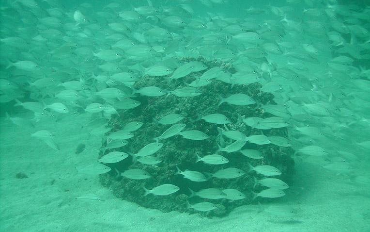 Eternal Reefs - Miami Ft Lauderdale - 2-12-043