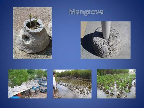 1-Reef-Ball-Mangrove-Restoration