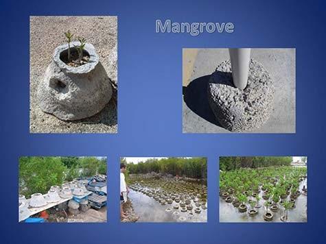1-Reef-Ball-Mangrove-Restoration