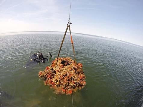 Chesapeake-Oyster-Reef-Ball