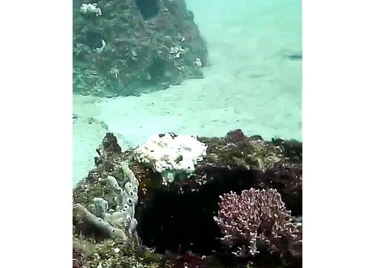 Eternal-Reefs-Mother-Natures-Finished-Work-04
