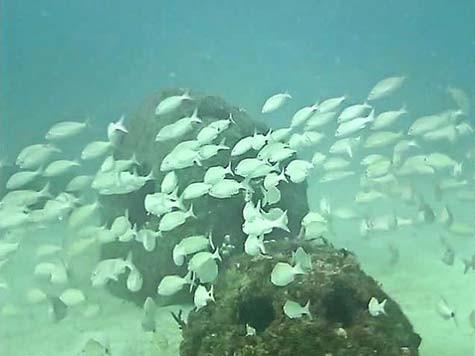 Fish-underwater-Miami-Griffin
