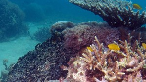 Eternal Reefs is Leading the Initiative on Green Burials at Sea
