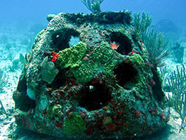 A green burial reef ball creating a new marine habitat for fish and other marine life