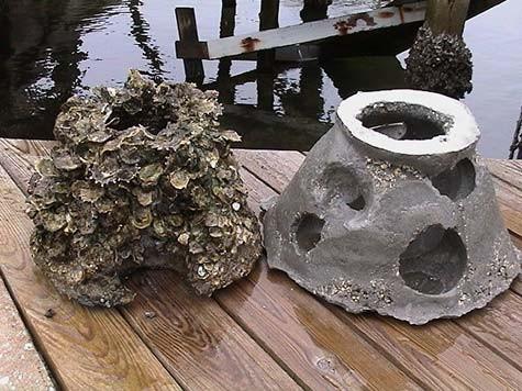 oyster-comparison